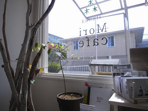 『いつか森になるカフェ』@奈良市神功-05