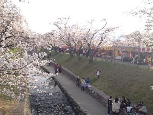 高田川の千本桜@大中公園(大和高田市)-05