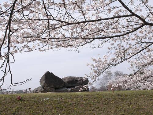 満開の桜@石舞台古墳(明日香村)-07