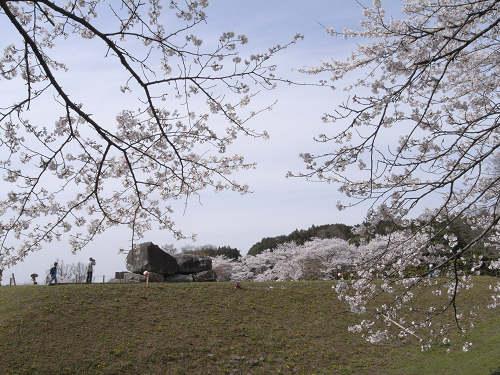 満開の桜@石舞台古墳(明日香村)-08
