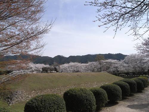 満開の桜@石舞台古墳(明日香村)-11