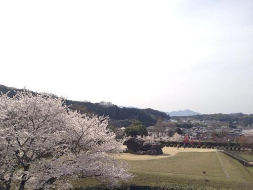 満開の桜@石舞台古墳(明日香村)-12