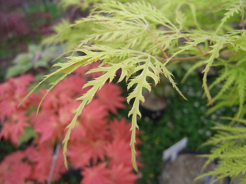 無料で楽しめる植物園『奈良カエデの郷ひらら』@宇陀市