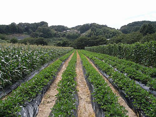 美味しく楽しい野菜収穫体験『信貴山のどか村』@三郷町