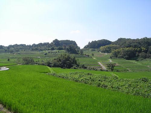 男根型の『マラ石』@明日香村祝戸地区-08