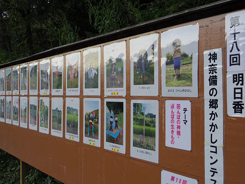 棚田と彼岸花と案山子@明日香村稲渕地区-17