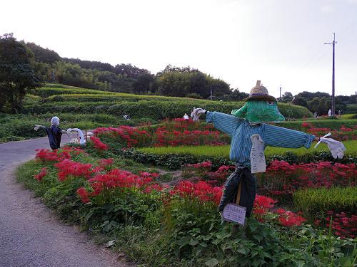 棚田と彼岸花と案山子@明日香村稲渕地区-18