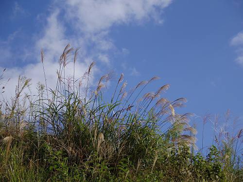 満開の「蕎麦」の花@桜井市笠地区-20