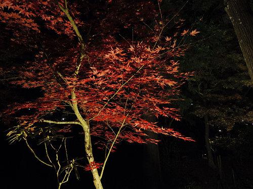 室生寺『国宝 五重塔と紅葉ライトアップ』@宇陀市-11
