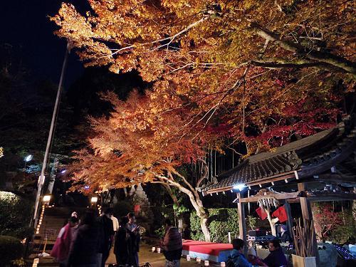 紅葉ライトアップ『等彌神社』@桜井市-05
