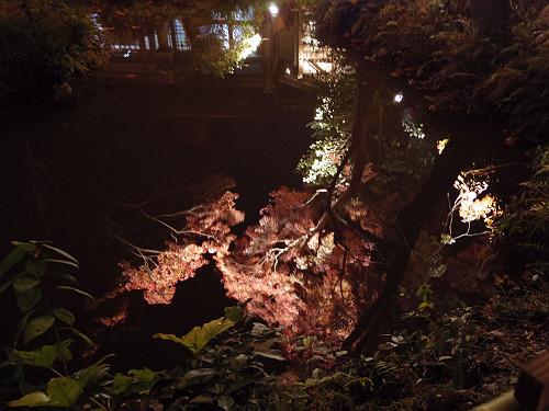紅葉ライトアップ『等彌神社』@桜井市-09