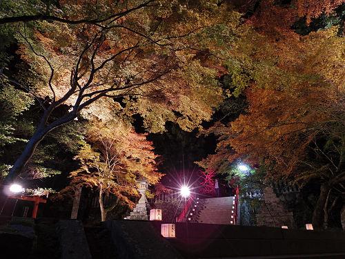 逆さ紅葉も見事!紅葉ライトアップ『等彌神社』@桜井市
