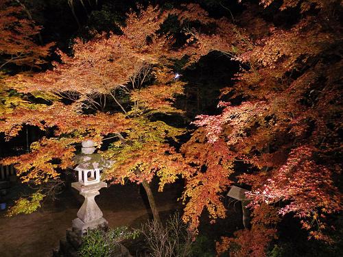 紅葉ライトアップ『等彌神社』@桜井市-14