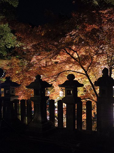紅葉ライトアップ『等彌神社』@桜井市-15