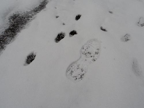 【写真】洞川の冬の初めの雪景色@天川村-04