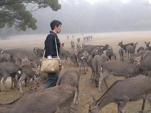 『鹿寄せ』@奈良公園-10