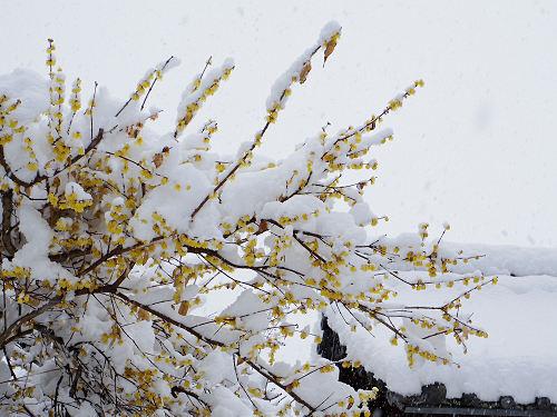 當麻寺の雪景色(西南院)-08