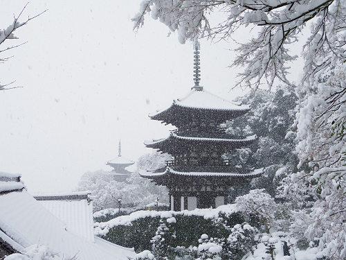 當麻寺の雪景色(西南院)-11
