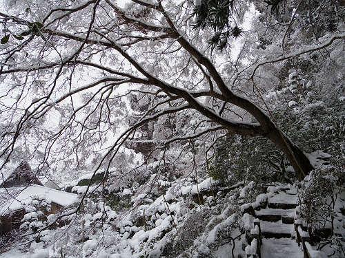 當麻寺の雪景色(西南院)-14