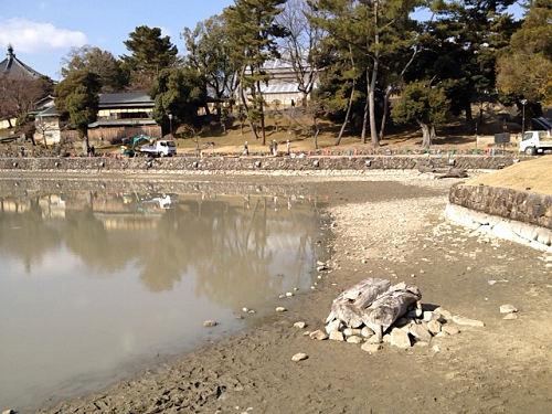 18年ぶり!水を抜いた『猿沢池』@奈良市-04