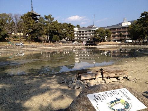18年ぶり!水を抜いた『猿沢池』@奈良市-09