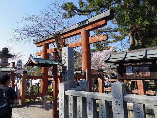 「奈良の一番桜」枝垂れ桜@氷室神社(奈良市)-01