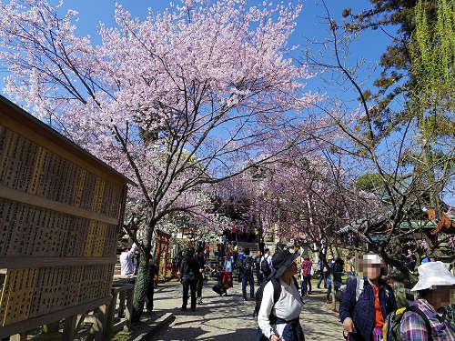 「奈良の一番桜」枝垂れ桜@氷室神社(奈良市)-02