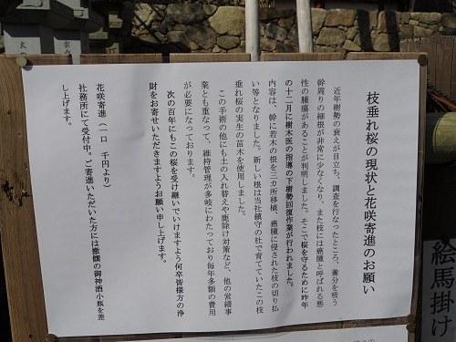 「奈良の一番桜」枝垂れ桜@氷室神社(奈良市)-07