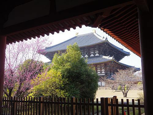 桜@東大寺大仏殿前-05