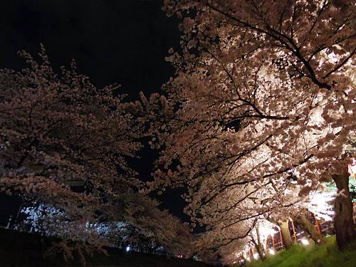 高田の千本桜@大中公園(大和高田市)-08