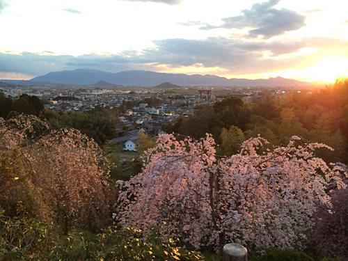桜満開の『大美和の杜展望台』@大神神社-05