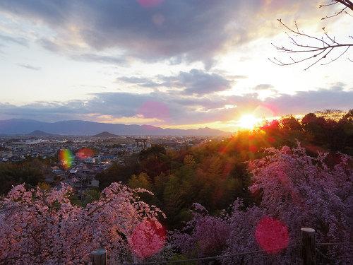 大和三山も一望!桜満開の『大美和の杜展望台』@大神神社