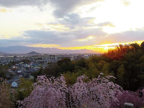 桜満開の『大美和の杜展望台』@大神神社-11