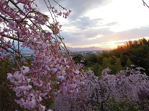 桜満開の『大美和の杜展望台』@大神神社-12