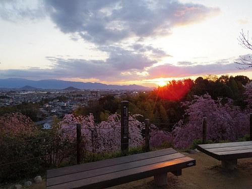 桜満開の『大美和の杜展望台』@大神神社-13