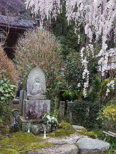小糸しだれ桜の『大野寺』@宇陀市-06