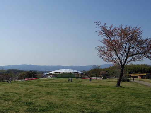 満開のチューリップ@馬見丘陵公園-15