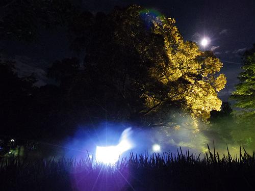 2014なら燈花会@奈良公園-16