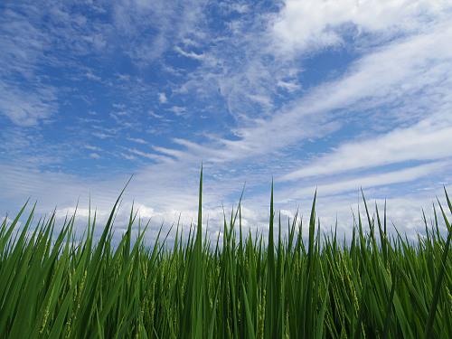 【写真】葛城山麓の夏の風景(御所市高天あたり)