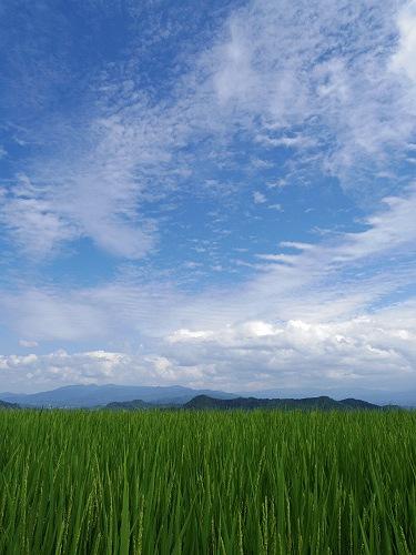 葛城山麓の夏の風景(御所市高天から)-10