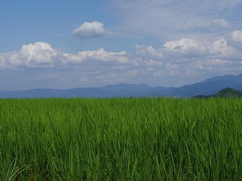 葛城山麓の夏の風景(御所市高天から)-15