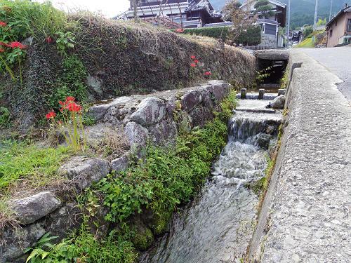 一言主神社と葛城古道のヒガンバナ-05