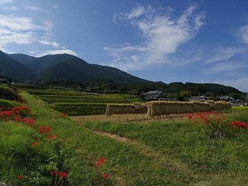一言主神社と葛城古道のヒガンバナ-08