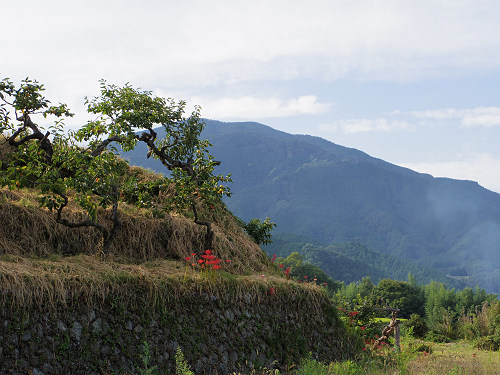 一言主神社と葛城古道のヒガンバナ-14