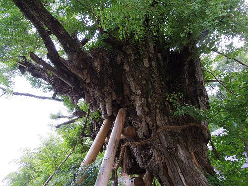 一言主神社と葛城古道のヒガンバナ-33