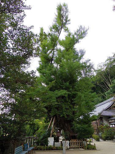 一言主神社と葛城古道のヒガンバナ-34
