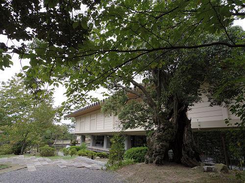 庭園・茶室「八窓庵」無料公開@奈良博-15