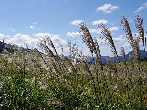 曽爾高原のススキと倶留尊山登山-06