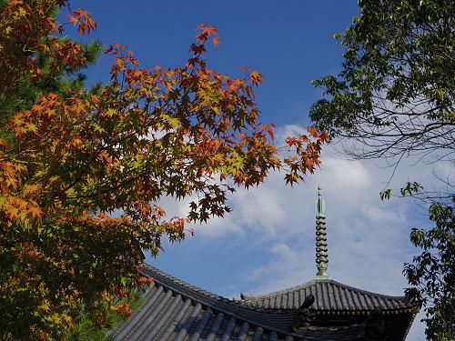 三重塔とコスモス『法起寺』@斑鳩町-14