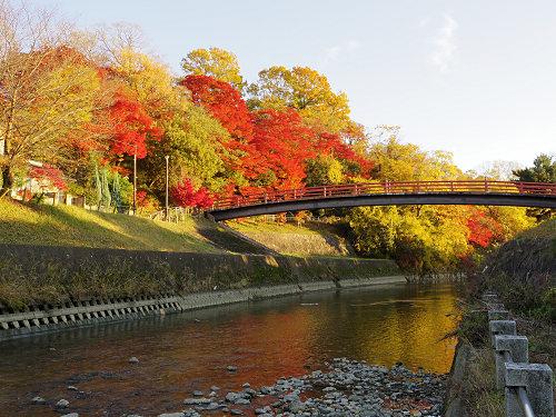 百人一首で有名な『竜田川の紅葉』は見事!@斑鳩町
